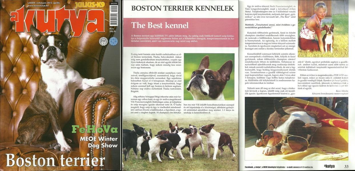 a kutya újságcikk The Best kennelről